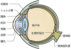 目の水平断面図(各部の名称と房水の流れ)